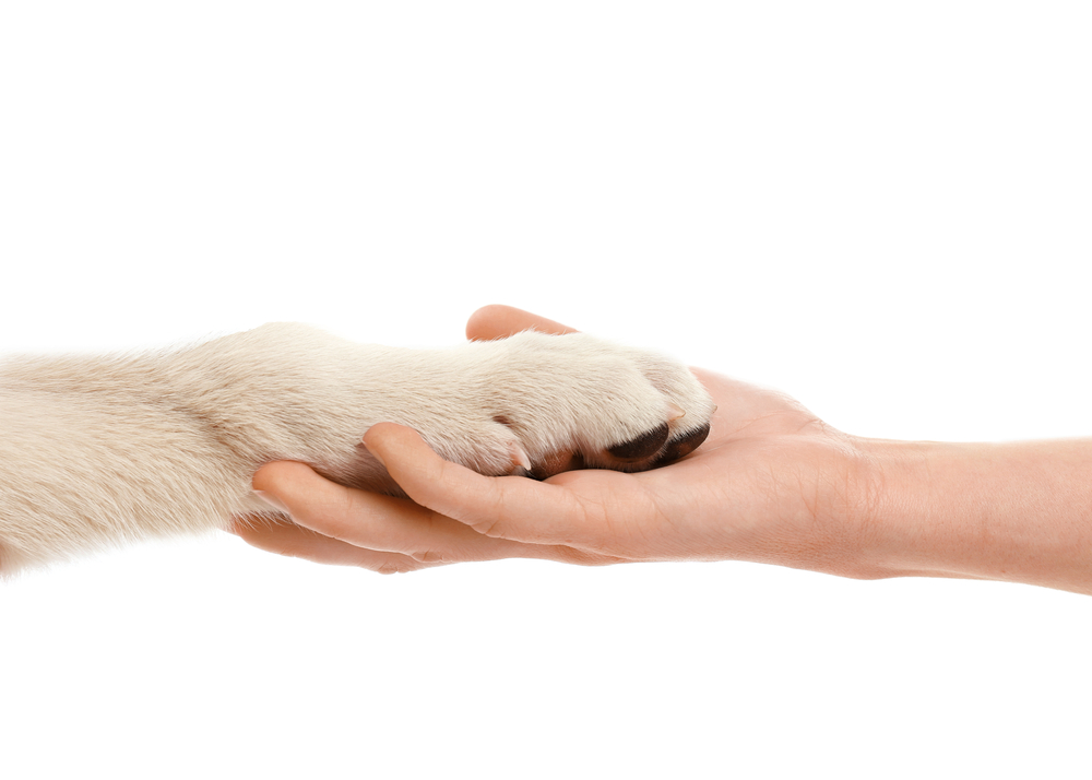 Female hand holding puppy's paw isolated on white